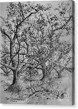Apple Orchard Canvas Print by Jim Hubbard