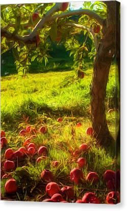 Apple Picking Canvas Print by Joann Vitali