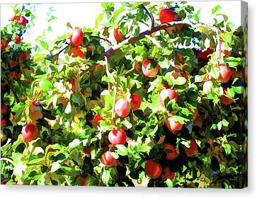 Apple Tree 1 Canvas Print by Lanjee Chee
