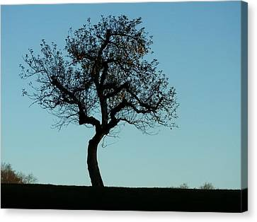 Apple Tree In November Canvas Print
