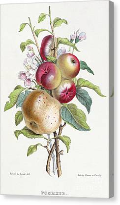Apple Tree Canvas Print by JB Pointel du Portail