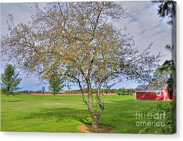 Apple Tree Canvas Print by Kathleen Struckle