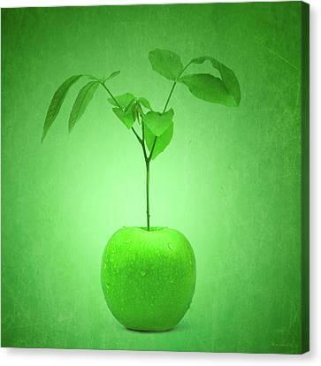 Apple Tree Canvas Print by Wim Lanclus