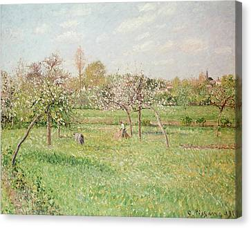 Apple Trees At Gragny Canvas Print by Camille Pissarro