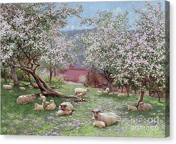 Lamb Canvas Print - Appleblossom by William Biscombe Gardner