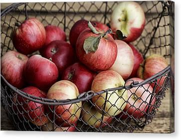 Apples Canvas Print by Nailia Schwarz