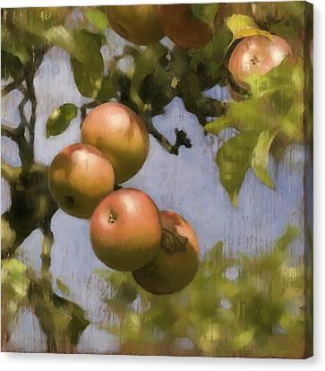 Apples On Wood Panel Canvas Print