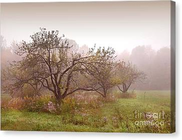 Apples Trees In The Mist Canvas Print by Sandra Cunningham