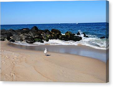 Canvas Print featuring the photograph Approaching Seagull by JoAnn Lense