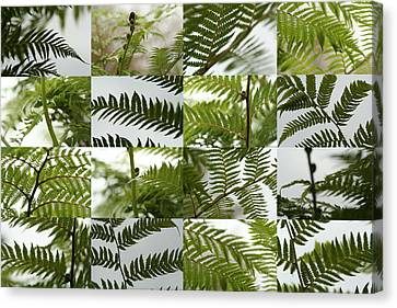 April Ferns 2 Canvas Print