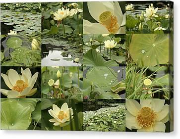 April Lotus Pond Canvas Print