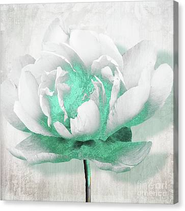 Aquarelle White Peony With Turquoise Canvas Print by Mindy Sommers