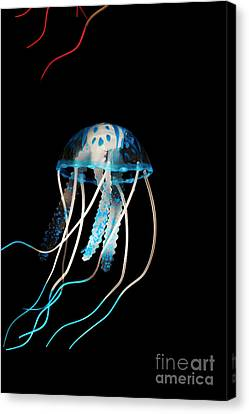 Aquarium Blue Canvas Print