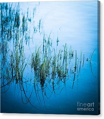 Aquatic Plant Canvas Print - Aquatic Plant by Bernard Jaubert