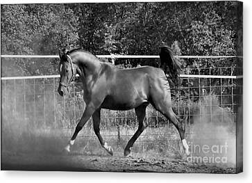 Arab At Play Bw Canvas Print