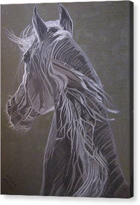 Canvas Print featuring the drawing Arab Horse by Melita Safran