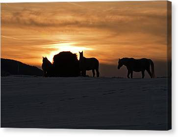 Canvas Print featuring the photograph Arab Horses At Sunset by Daniel Hebard