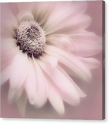 Canvas Print featuring the photograph Arabesque In Ballet Pink by Darlene Kwiatkowski