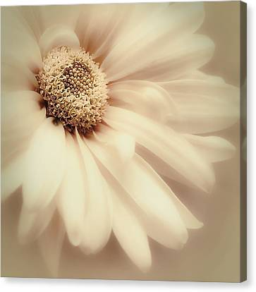 Canvas Print featuring the photograph Arabesque In Butternut by Darlene Kwiatkowski