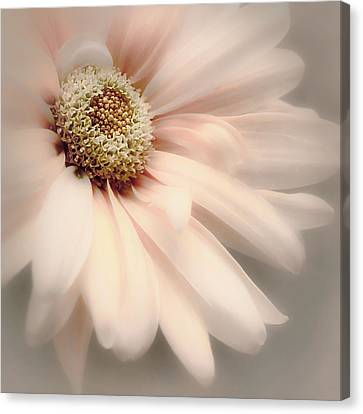 Canvas Print featuring the photograph Arabesque In Peach Glow by Darlene Kwiatkowski