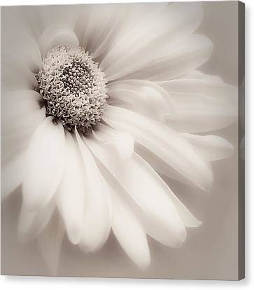 Canvas Print featuring the photograph Arabesque In Soft Charcoal by Darlene Kwiatkowski