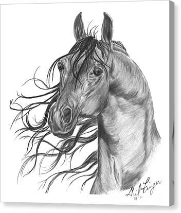 Arabian Head Canvas Print by Gail Finger