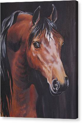 Arabian Horse 1 Canvas Print