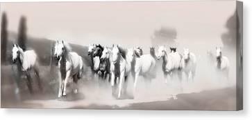 Arabian Mares - Home Run  Canvas Print by ELA-EquusArt