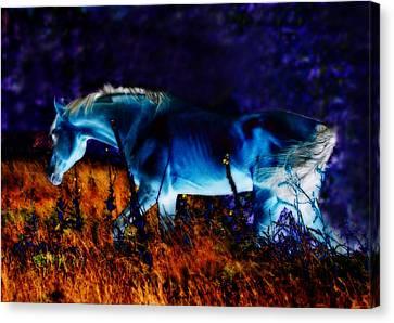 Equine Pastels Canvas Print - Arabian Stallion by ELA-EquusArt