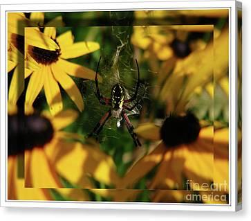 Canvas Print featuring the photograph Arachnid Beauty by Deborah Johnson