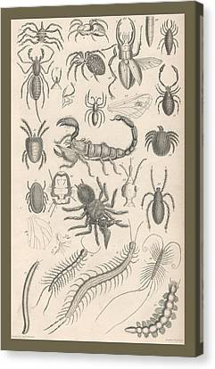 Arachnides. Myriapoda Canvas Print by Rob Dreyer