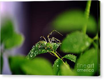 Arachnishower Canvas Print by Clayton Bruster