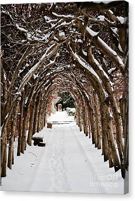Arbor In The Snow Canvas Print by Rachel Morrison