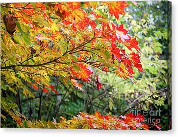 Arboretum Autumn Leaves Canvas Print