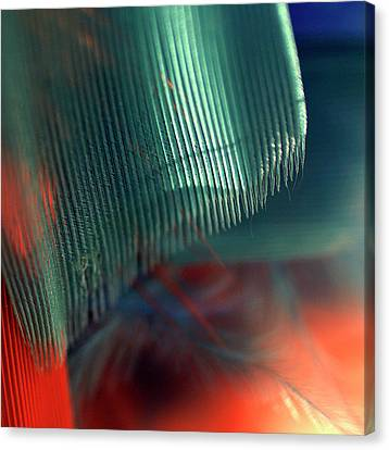 Canvas Print featuring the photograph Architect Of A Feather by Irma BACKELANT GALLERIES
