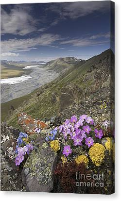 Arctic Wildflowers, Alaska Canvas Print by Art Wolfe/MINT Images