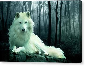 Arctic Wolf Canvas Print by Julie L Hoddinott