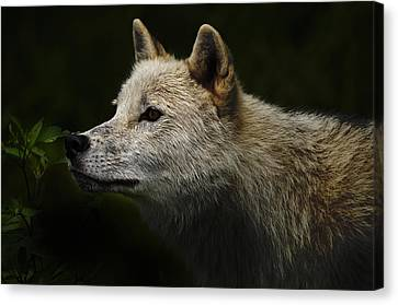 Canvas Print featuring the photograph Arctic Wolf Portrait by Michael Cummings