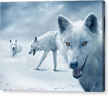 Arctic Wolves Canvas Print by Mal Bray