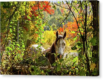 Canvas Print featuring the photograph Are You My Friend? by Jeff Folger