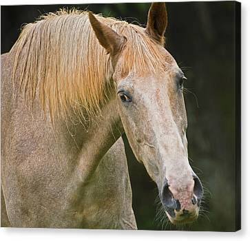 Are You Taking My Picture Canvas Print
