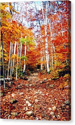 Arethusa Falls Trail Canvas Print