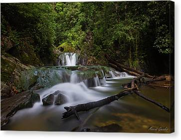 Aripo Waterfall Canvas Print by Marcus Gonzales
