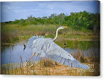 Arise Canvas Print by Judy Kay