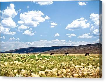 Arizona Desert Horses Canvas Print by Ryan Kelly