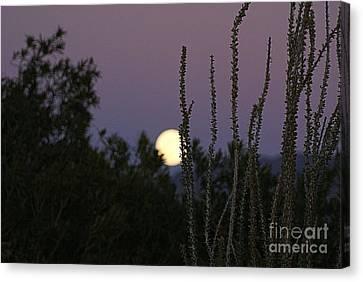 Arizona Moon Canvas Print by Joanna Thompson