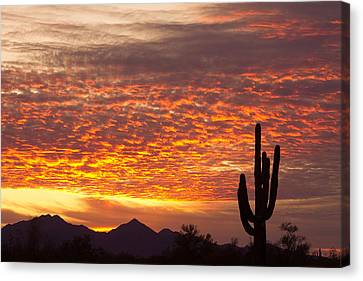 Arizona November Sunrise With Saguaro   Canvas Print