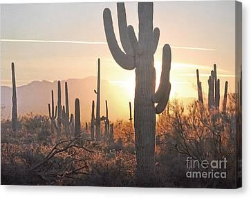 Arizona Saguaro Cactus Sunset Desert Landscape Canvas Print by Andrea Hazel Ihlefeld
