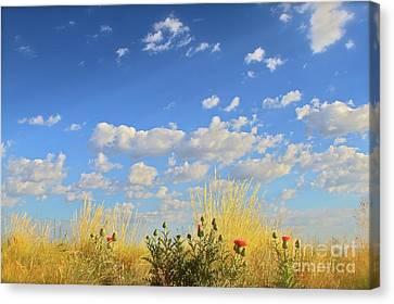 Arizona Sky And Golden Grass Canvas Print by Gus McCrea