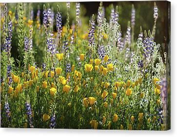Canvas Print featuring the photograph Arizona Spring Wildflowers  by Saija Lehtonen